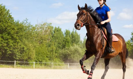 Cours particulier d'équitation